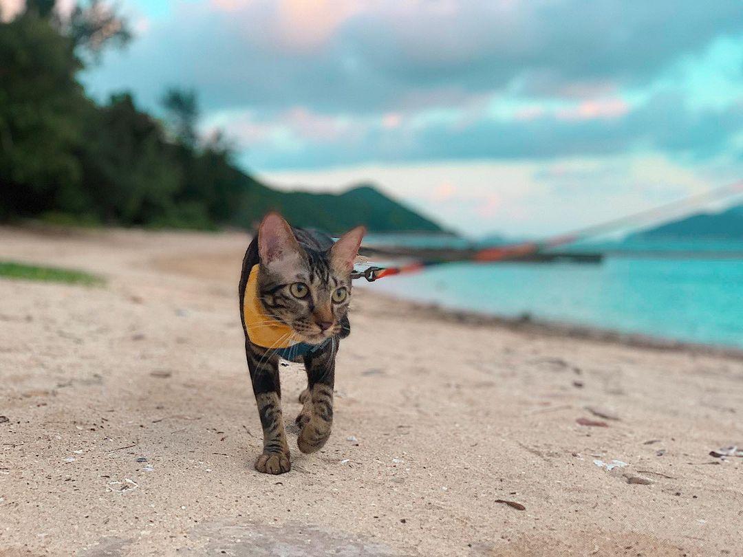 貓貓好去處|五大貓貓外出放電提案 $68玩盡貓界樂園