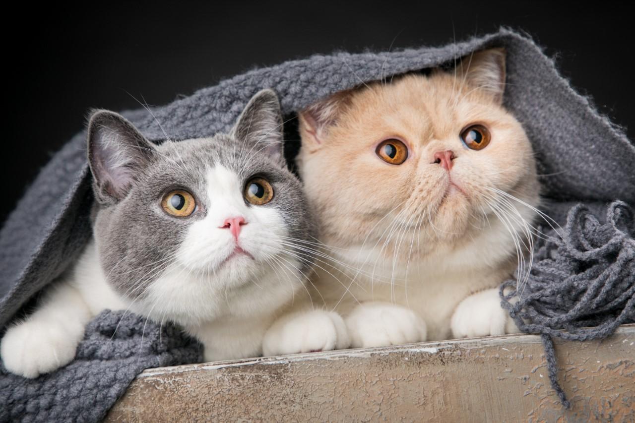 新手貓爸媽購物清單